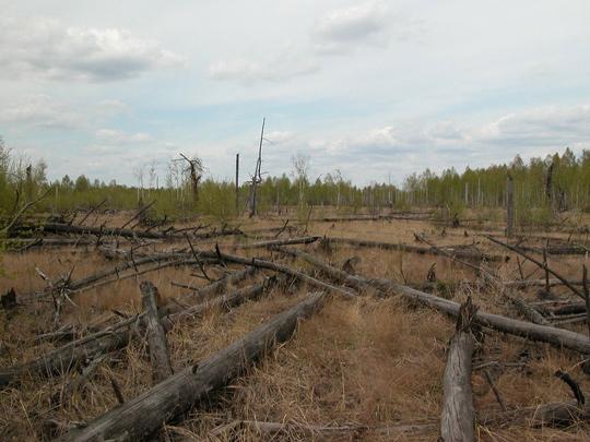 Chernobyl-fallen-trees